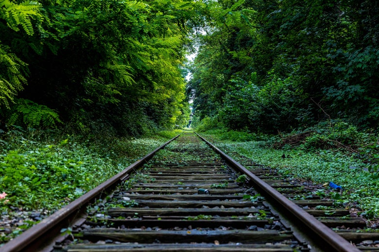 Straight-ahead look at a railroad track amid lots of trees and other plants.