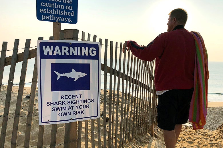 A shark warning sign is seen on a fence on a beach as a man stands looking out at the water.