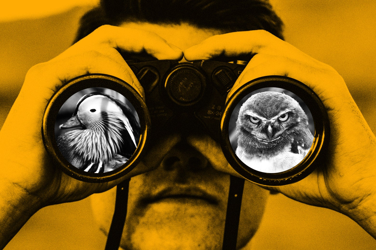 Photo illustration of owls as seen through binoculars.