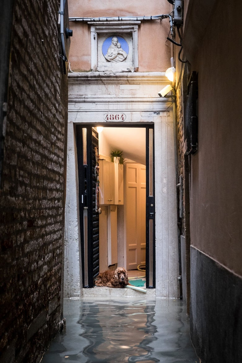 A dog at the door of a building observes the water filling the narrow city street in front of the building.