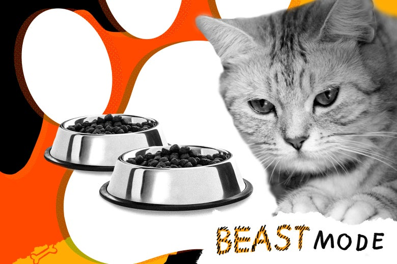 Photo illustration of a stoic-looking cat sitting in front of two pet bowls filled with cat food.