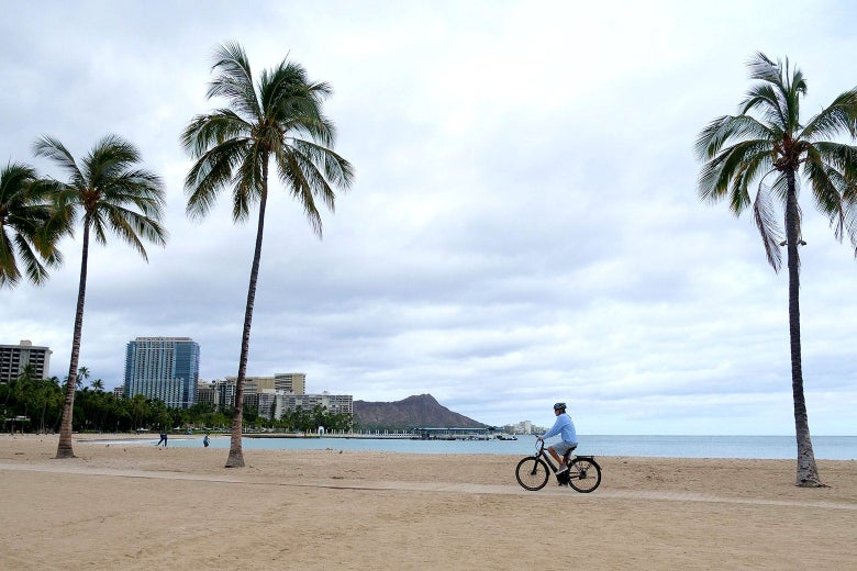 A cyclist rides along an empty beach with three palm trees towering over the path