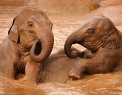 Elephants. Click image to expand.