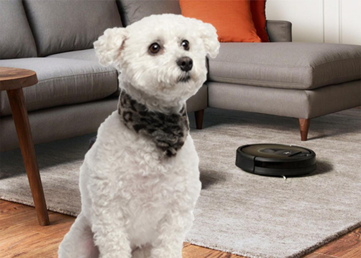 When a Roomba goes up against animal poop, no one wins