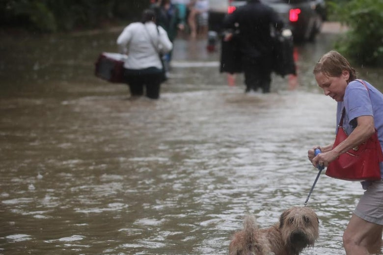 A woman and her dog walk through floodwaters.