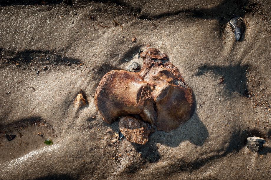 Dead Horse Bay.