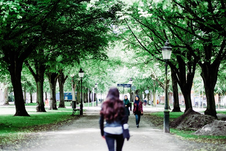 A woman walks between rows of trees.