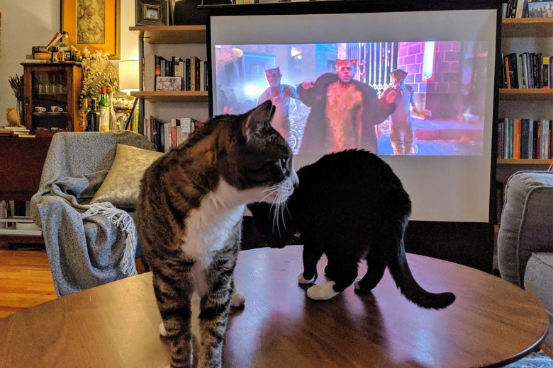 Two cats on a table look away from the Cats movie trailer projected on a screen.