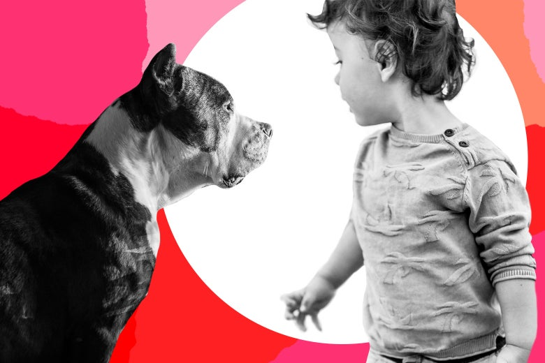 toddler and pit bull