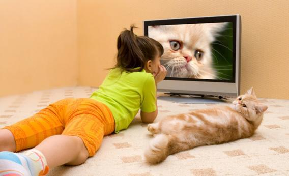 Cat watching television.