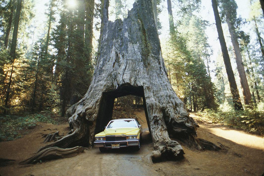 Dad's yellow Cadillac, near Yosemite, CA. October, 1988.