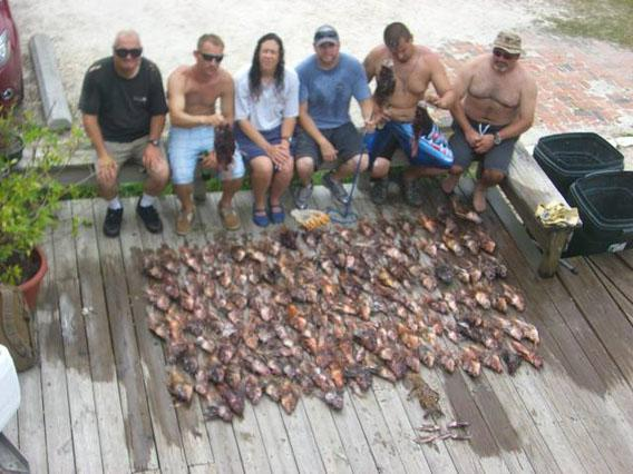 Lots, and lots, of lionfish caught by the Discovery Diving crew on one day.