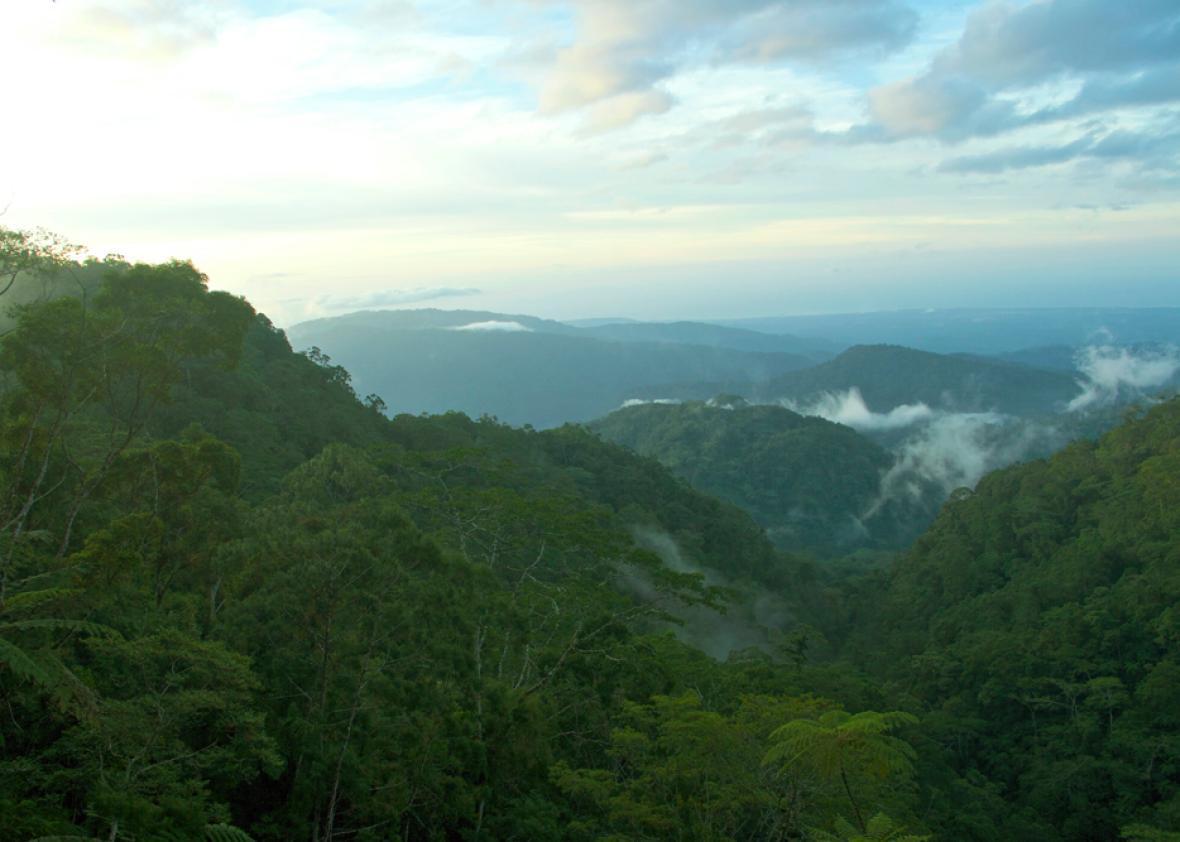"The remote ""sky island"" of Guadalcanal, Papua New Guinea."