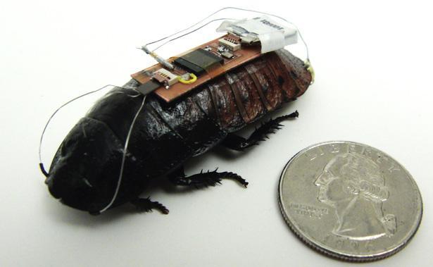 robocockroach