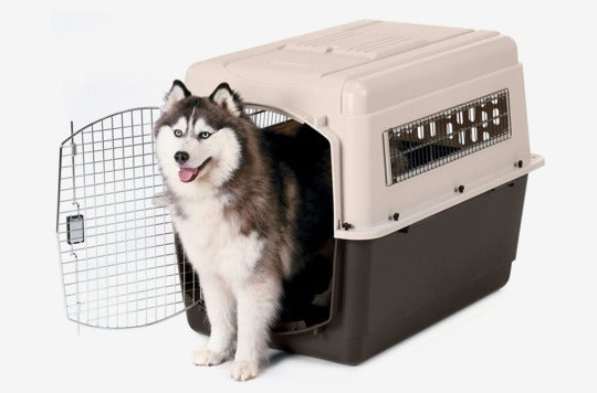 Dog in a Petmate Ultra Vari Kennel.