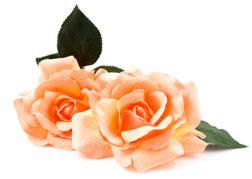 Silk roses.