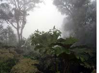 The quiet, calm cloud forest