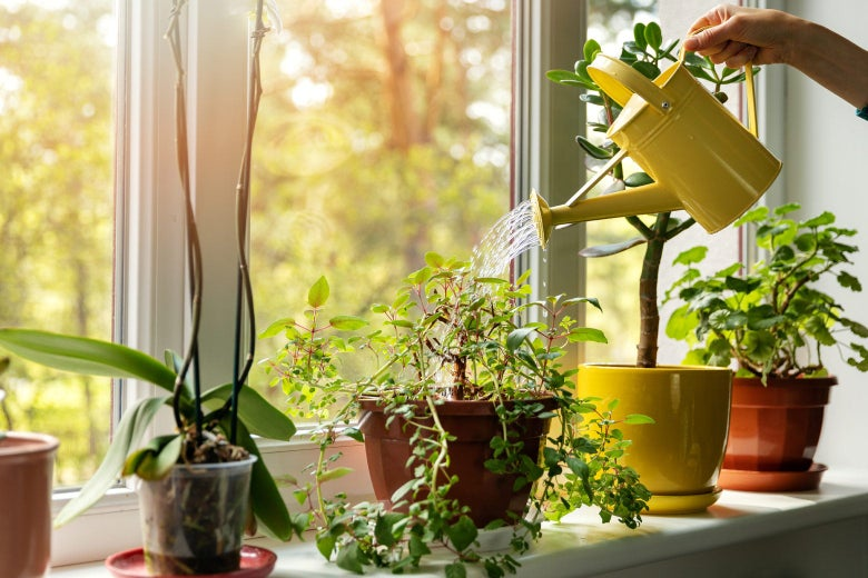A woman's hand is seen watering house plants on a windowsill.