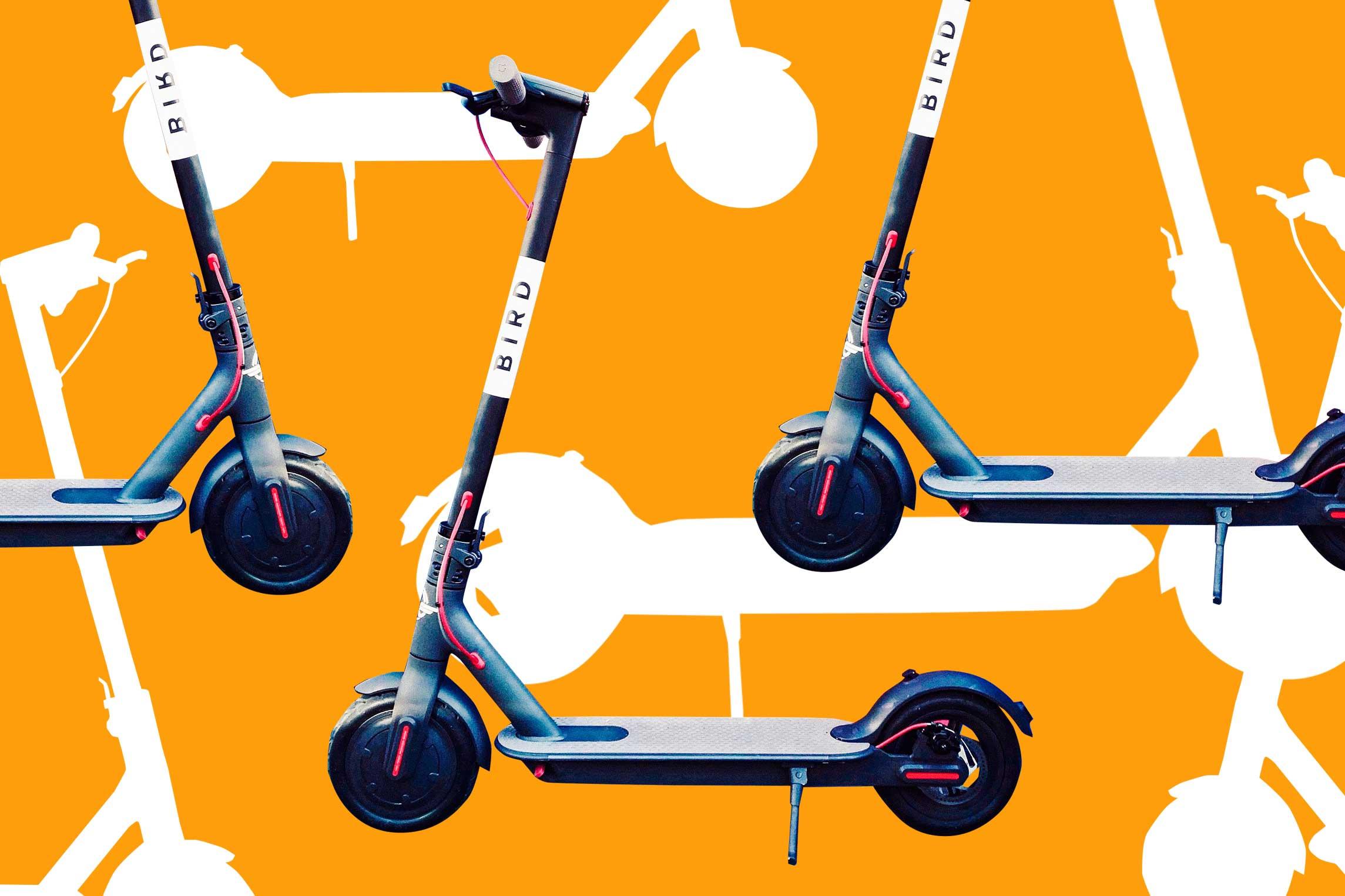 Bird scooter.