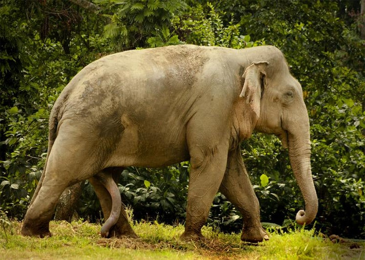 Electroejaculation Helps Endangered Species Reproduce-6338