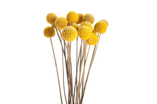 Richland Preserved Billy Buttons