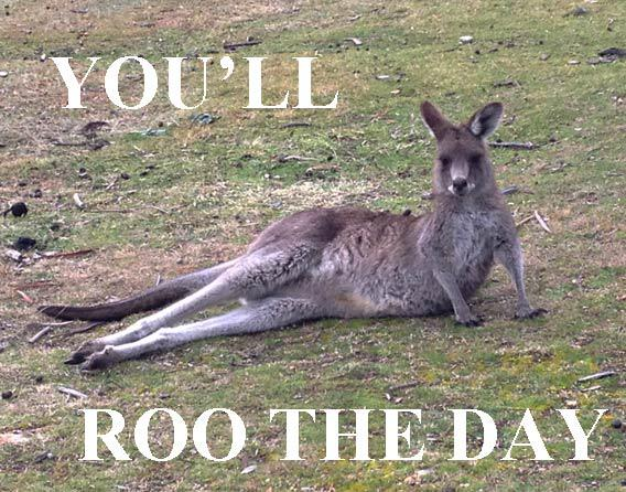Roo the day