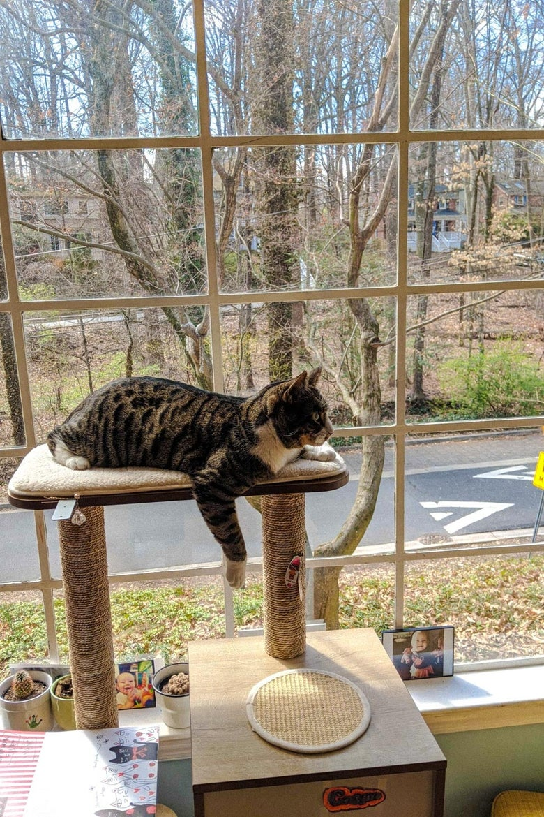 A window behind a cat on a cat tower.