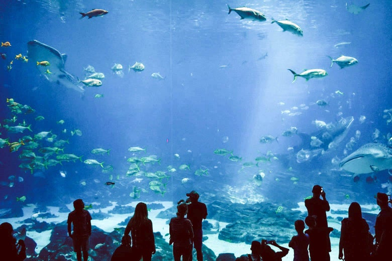 People standing in silhouette in front of a giant aquarium featuring many different types of fish.