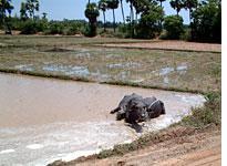Village tanks replenished