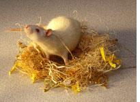 Can mouse poison kill you?