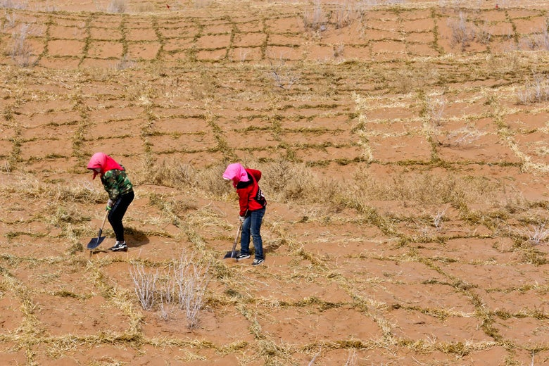Two women use shovels to work parched-looking land.