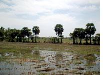 Wet fields after the rains
