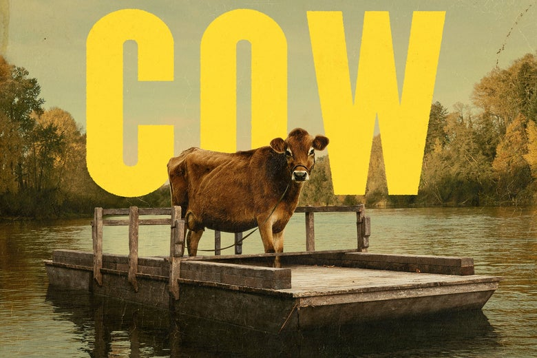 First Cow: A profile of Eve, the bovine star of Kelly Reichardt's ...