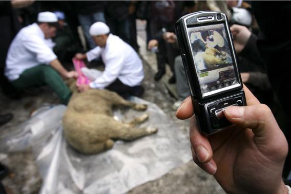 A man takes pictures using his mobile phone of Russian muslims slaughtering a sheep to mark the Muslim feast of Eid al-Adha (Kurban-Bayram), outside the main Mosque in Moscow.