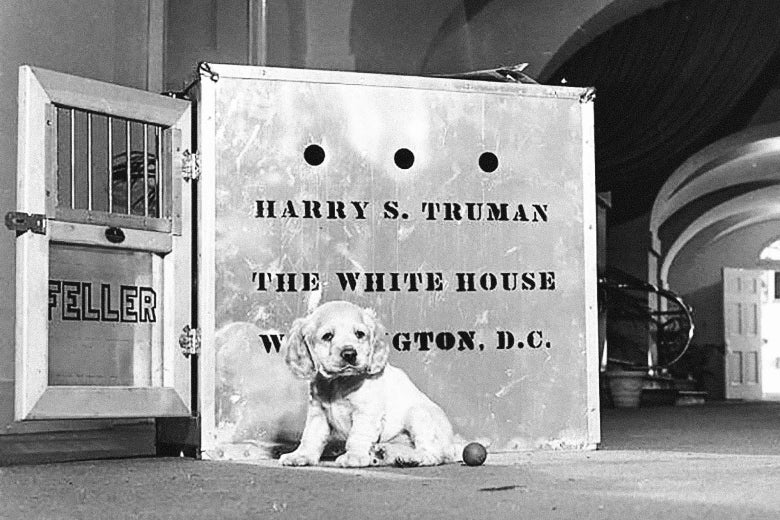 """A cocker spaniel puppy sits in front of a cage with """"Harry S. Truman/The White House/Washington D.C."""" written on it."""