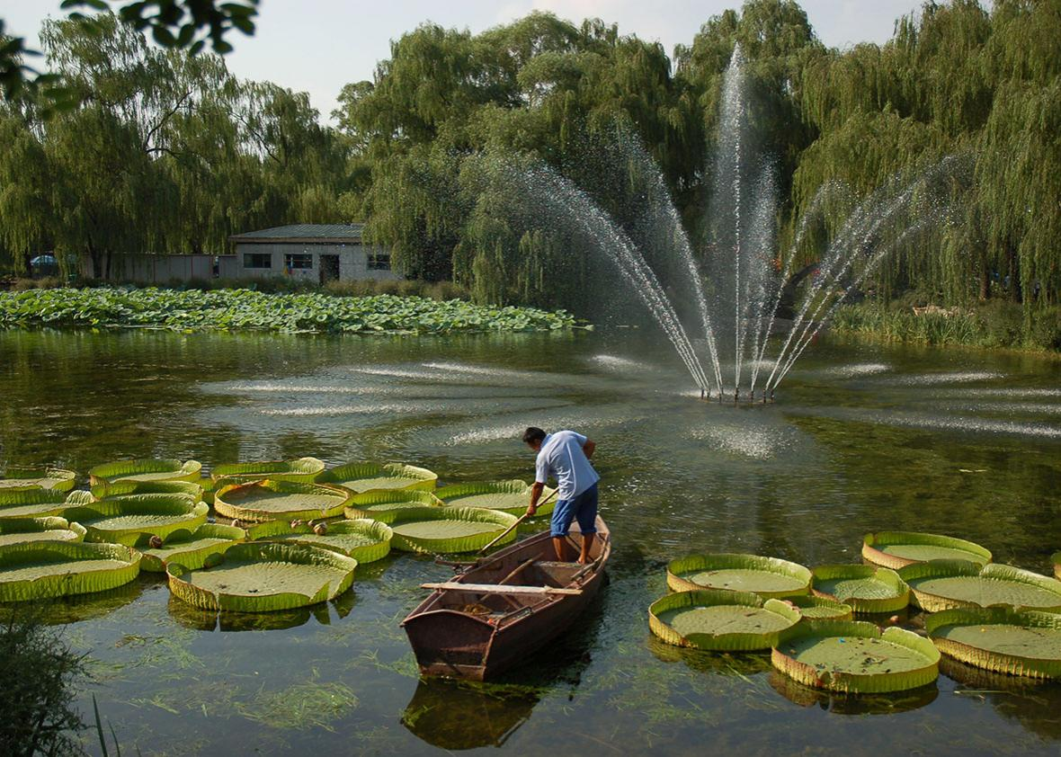 A man stands on a boat in Beijing's Summer Palace, August 16, 2010.