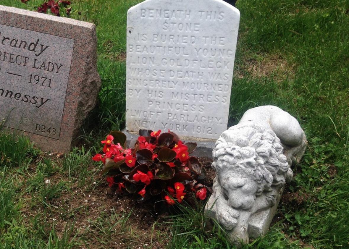 Goldfleck the Lion, buried in a New York pet cemetery, lived at ...