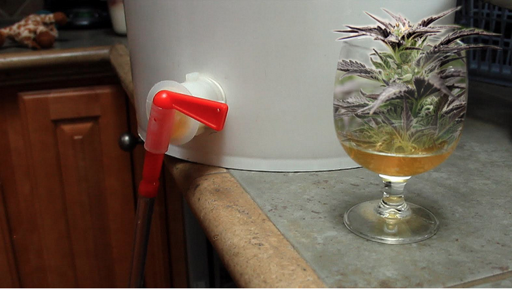 Weed beer: How to brew pot-infused High-PA, a cannabis beer from Colorado (VIDEO).