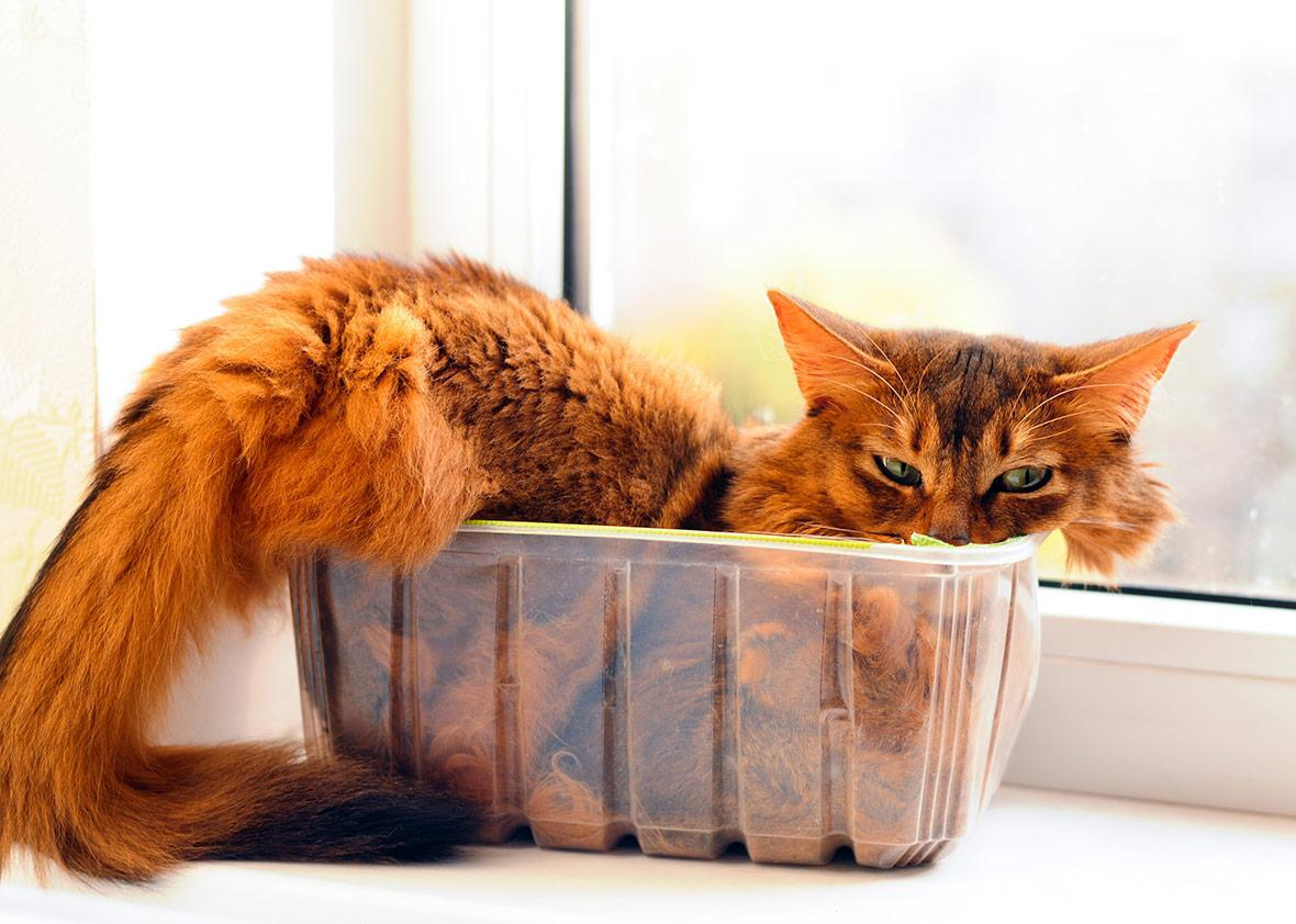 How assessing if a cat is a liquid advanced science.