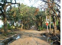 Downed tree limbs on our street         Click on image to expand