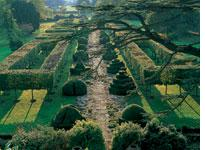 Topiaries. Click image to expand.