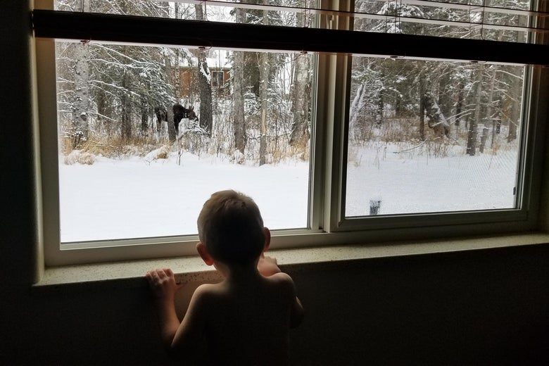 Young child looking out of window at an animal in the distance.