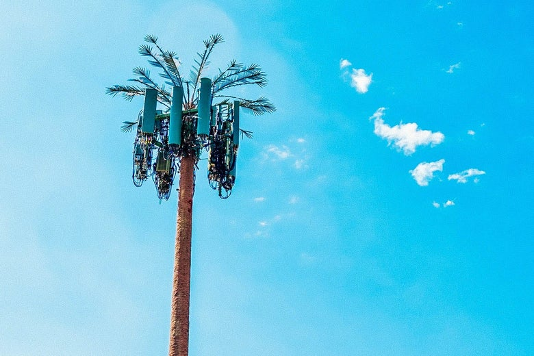A palm tree that's also a cell tower