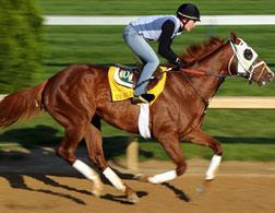 Kentucky Derby horse Dublin. Click image to expand.