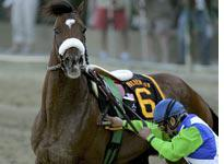 Jockey Edgar Prado tries to control Barbaro after pulling him up          Click image to expand.