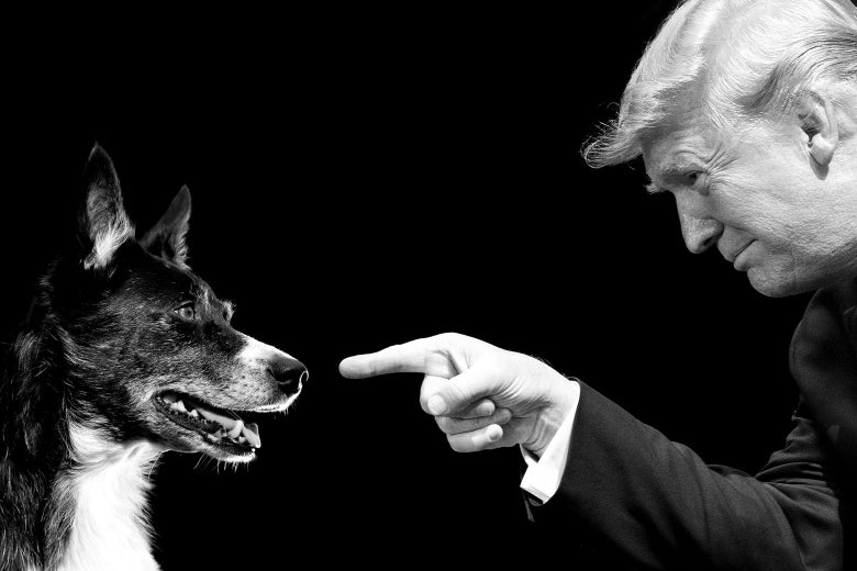 Photo illustration of a smiling dog and President Donald Trump pointing right at the dog.