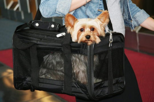 Small dog in a Sherpa Deluxe Pet Carrier.