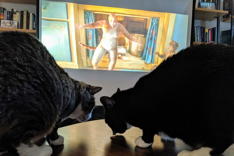 Cats watch the Cats trailer.