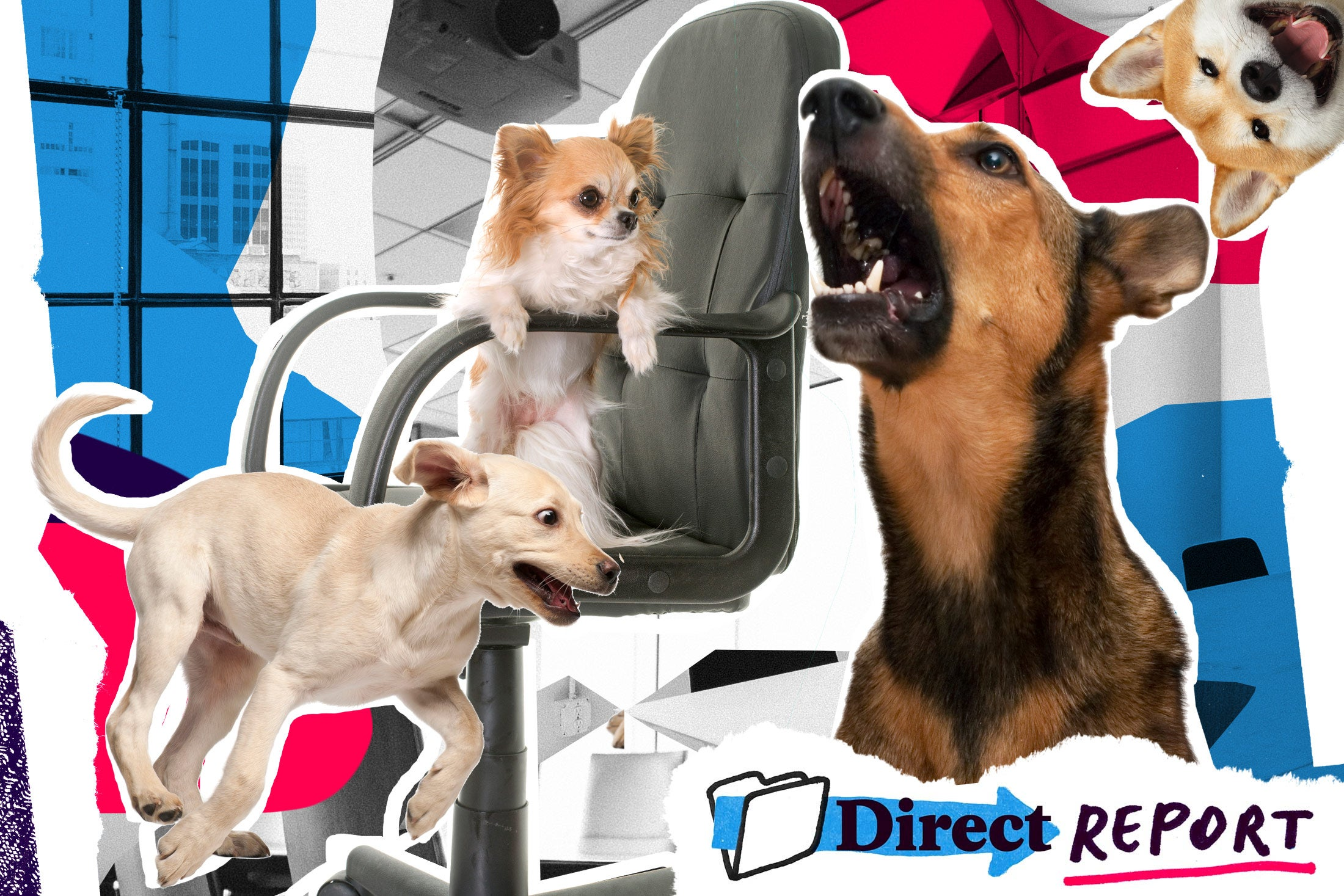 Photo illustration of dogs. Lots of dogs. Dogs running, dogs barking, dog in an office chair, dogs with playful expressions. They're all good dogs.