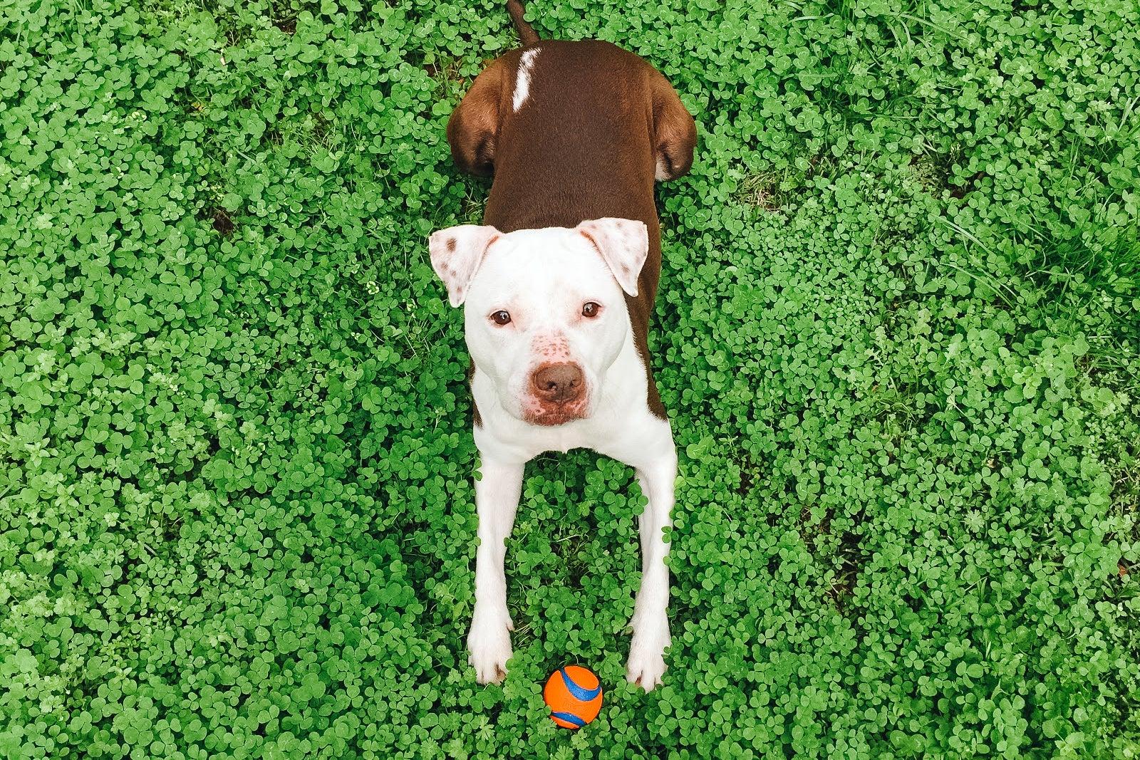 dog with a Chuckit Ultra Ball